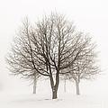 Trees In Winter Fog by Elena Elisseeva