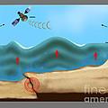Tsunami Warning Diagram by Gwen Shockey
