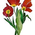 Tulip Trio by Nan Wright