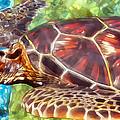 Turtle 1 by Dawn Eshelman