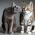 Two Cats by Nailia Schwarz