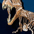 Tyrannosaurus Rex by Millard H. Sharp
