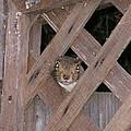 Curious Squirrel by Cynthia Marcopulos
