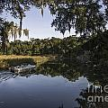Up The Creek by Dale Powell