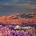 Usa, California, Dumont Dunes by Jaynes Gallery