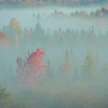 Usa, West Virginia, Canaan Valley State by Jaynes Gallery
