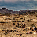 Valley Of The Names by Robert Bales