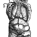 Vesalius: Thoracic Cavity by Granger