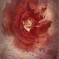 Victorian Rose by Mel Hensley
