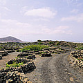 Vineyard On Lanzarote by Karol Kozlowski