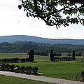 Vineyards In Va - 12123 by DC Photographer