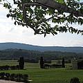Vineyards In Va - 12124 by DC Photographer