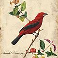 Vintage Bird Study-e by Jean Plout