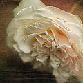 Vintage Tea Rose by Terry Fleckney