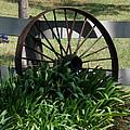 Wagon Wheel by Pamela Walton
