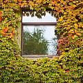 Wall Overgrown With Fall Colored Vine And Ivy by Stephan Pietzko