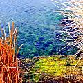 Water by Marilyn Diaz