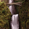 Waterfall In A Forest, Multnomah Falls by Panoramic Images