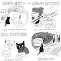 What's Next For The Subway Kittens by Emily Flake