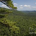 White Mountain National Forest by Jim West
