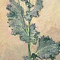 White Poppy by Claude Monet