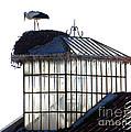 White Stork by Tim Holt