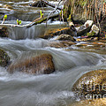 Whites Creek by Dianne Phelps