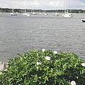 Wickford Harbor by Kate Gallagher