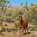 Wild Horse Of Joshua Tree by Wolfgang Hauerken