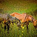 Wild Horses In California Series 2 by Barbara Snyder