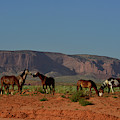 Wild Horses In Monument Valley by Raul Touzon