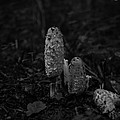 Wild Mushrooms by Miguel Winterpacht