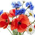 Wildflower Bouquet by Elena Elisseeva