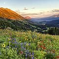 Wildflower Moonrise by JC Leacock