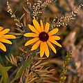 Wildflower by Wayne Vedvig