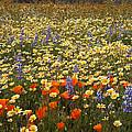 Wildflower Wonderland 9 by Lynn Bauer