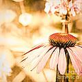 Wildflowers by Joe Mamer