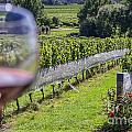 Wineglass In Vineyard by Patricia Hofmeester