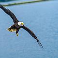 Wing Span by Kyle Breckenridge