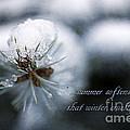 Winter by Darren Fisher