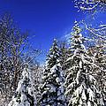 Winter Forest Under Snow by Elena Elisseeva