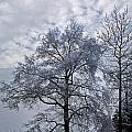 Winter Lace by Skip Willits