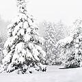 Winter Landscape by Gwen Gibson