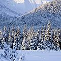 Winter Scenic Of Snowcovered Spruce by Jeff Schultz