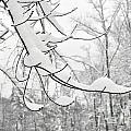 Winter Snow Scene In New England by Staci Bigelow