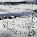 Winter Stream, Jasper National Park by John Shaw