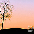 Winter Sunset Tree by Mike Nellums
