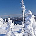 Winter View Of Snow Covered Trees by Jaroslav Frank