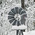 Winter Wind  by Jamie  Smith