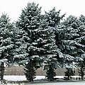 Winter Wonderland  by Lori Tordsen